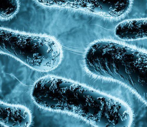 Die Extrakorporale Hyperthermie-Perfusion zur Behandlung der Borreliose